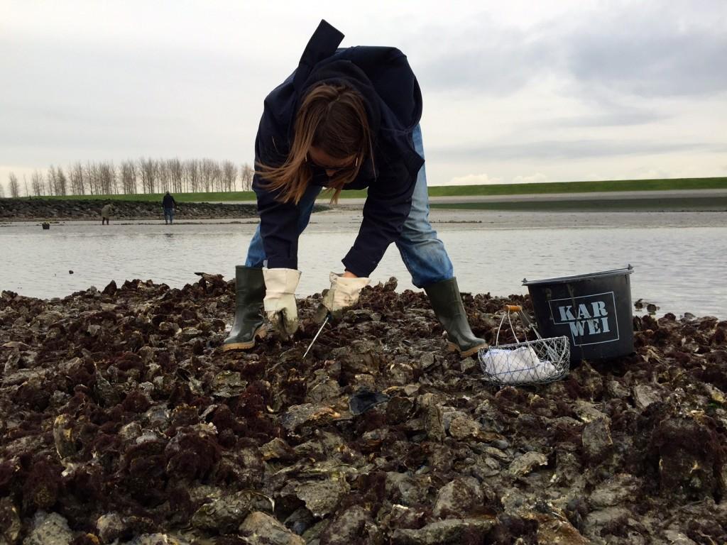 oesters rapen 1